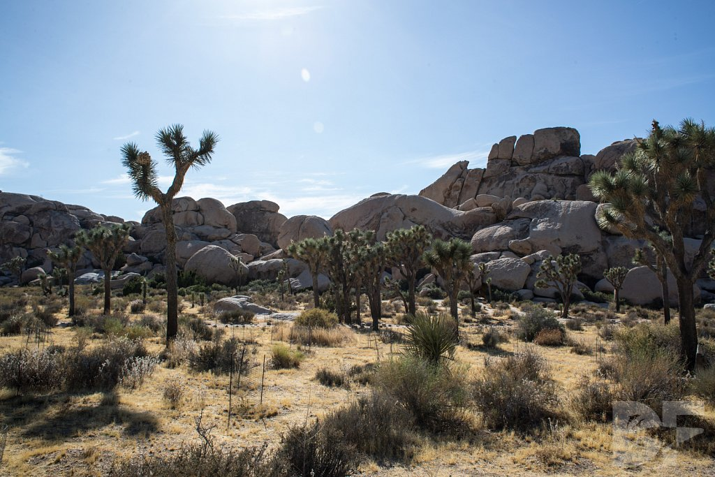 My Day in Joshua Tree XXVIII