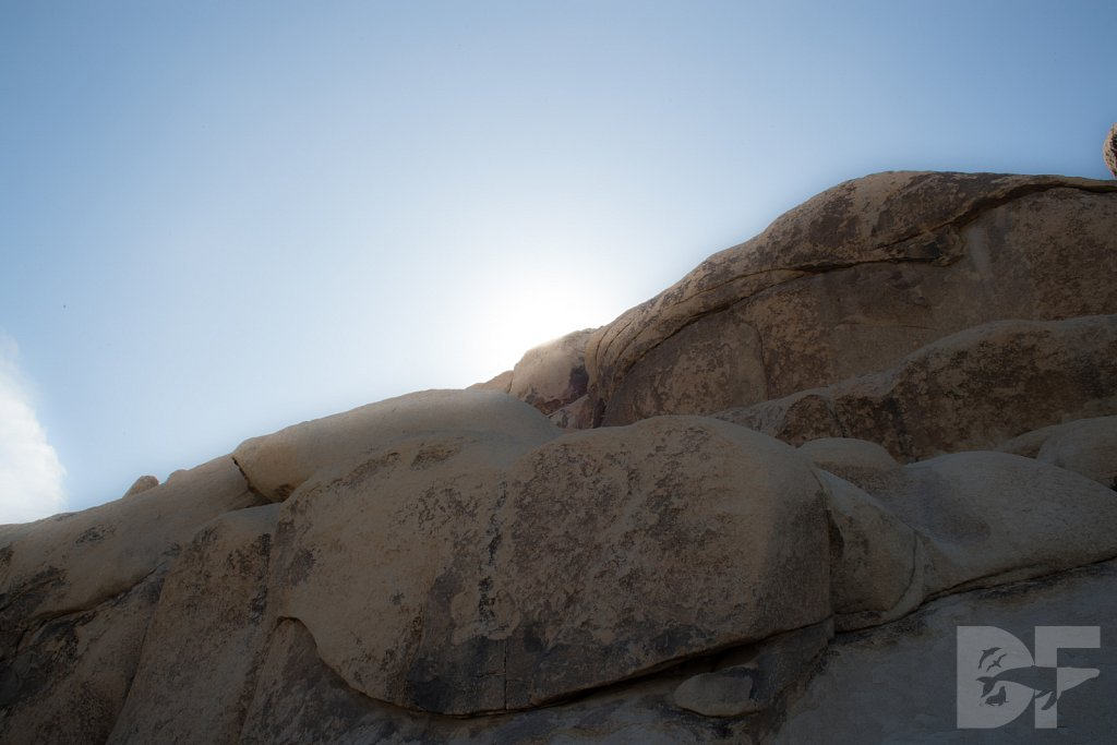 My Day in Joshua Tree XXIX