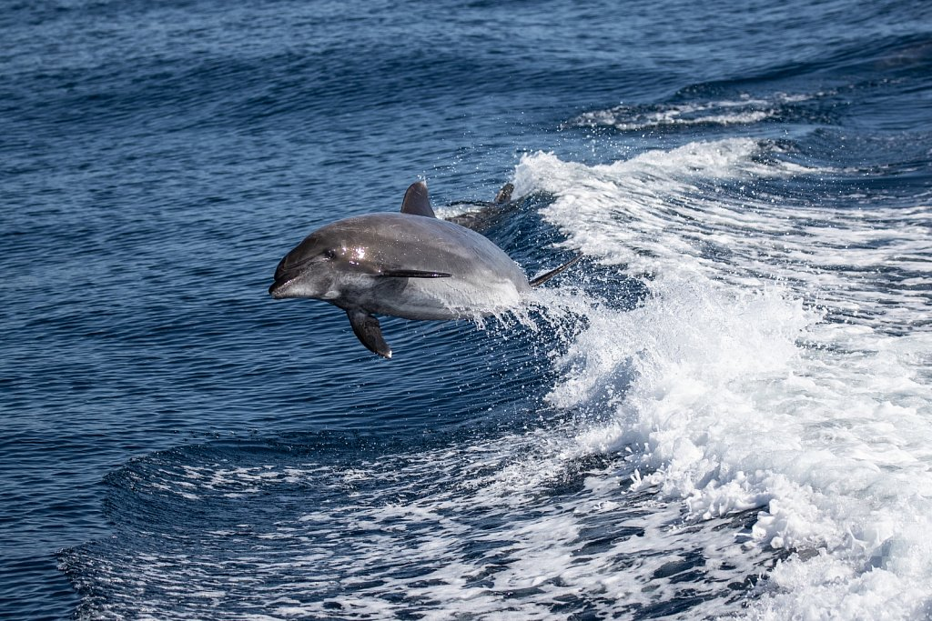 Determined Dolphin XI