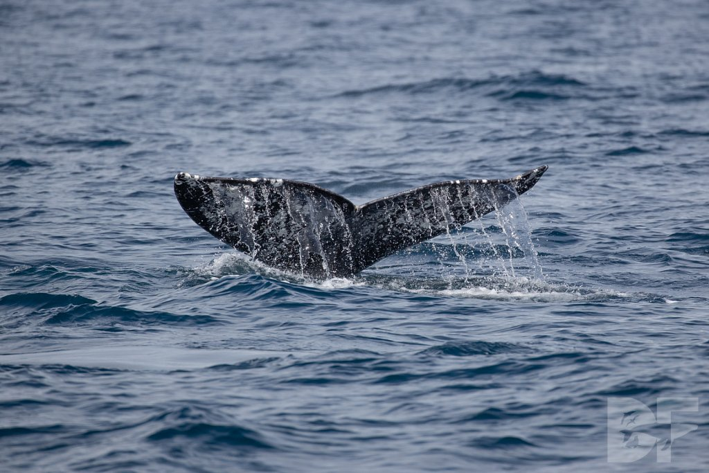 There Go Gray Whales X